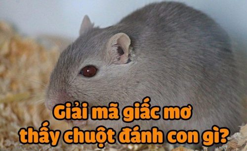 mo-thay-chuot